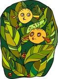 Little birds. Two amusing round birdies among green foliage Royalty Free Stock Image