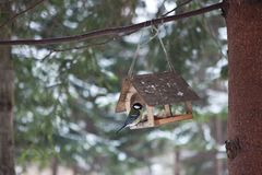 Birds in the bird feeder in the winter snow forest royalty free stock photos