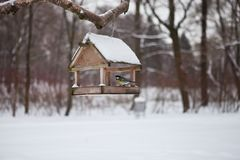 Birds in the bird feeder in the winter snow forest. Little birds in the bird feeder in the winter snow forest. Titmouse sits on a branch. House for birds. A Stock Images
