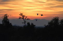 Little birds fly in the morning under the light of dawn. stock photos