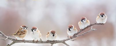 Little birds are sitting next to each other on a branch in a Sunny spring Park and chirping merrily. Beautiful little birds are sitting next to each other on a royalty free stock photo