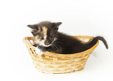 Little bitty funny kitten in the wicker basket Stock Photography