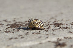 Little Black Ants and Snail Stock Photo