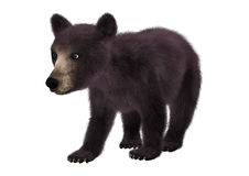 Little Black Bear. 3D digital render of a cute little American black bear or Ursus americanus isolated on white background Stock Photos