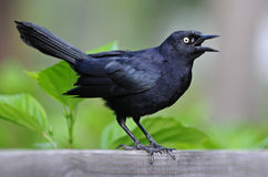 Little black bird. On the trunk royalty free stock photo