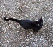 A little black cat. A little, cute black cat stock photos