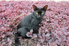 Little black cat. Royalty Free Stock Photography