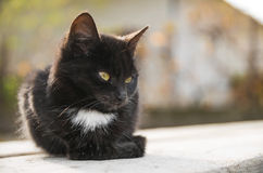 Little black cat sits on wood plank Stock Photography