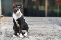 Little black cat with white collar mark stray cat sitting on con. Crete floor royalty free stock photos