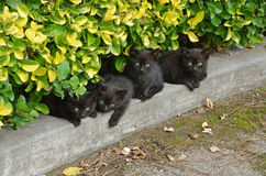Little black cats Royalty Free Stock Images
