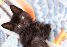 Little black cute kitten lies on a bed Royalty Free Stock Images