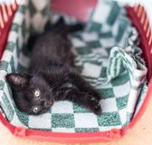 Little black cute kitten lies on a bed Royalty Free Stock Photos
