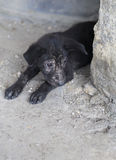 Little black dog Stock Images