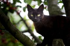 The little black domestic cat. On the tree stock images