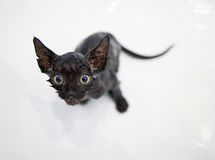 Little black kitten basking in the bath Royalty Free Stock Image