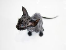 Little black kitten basking in the bath Royalty Free Stock Photography