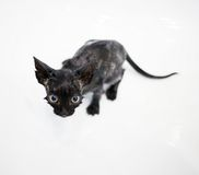 Little black kitten basking in the bath Royalty Free Stock Photos
