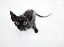 Little black kitten basking in the bath Royalty Free Stock Photos