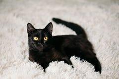 Little Black Kitten On Bed Stock Photo