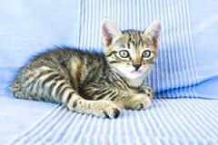 Little black kitten Stock Image