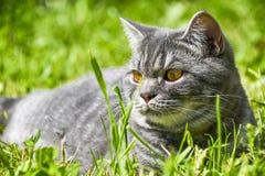 Little black kitten in a grass Stock Images