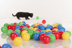 Little black kitten playing with colorful balls Royalty Free Stock Images