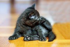 Little black kitten sitting on the wooden floor. Pets concept.  stock photo