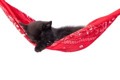 Little black kitten sleeps on a red hammock. Royalty Free Stock Images