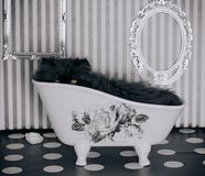 Little black kitty in the bathtub. Black little kitty in a fancy bathtub Royalty Free Stock Photos