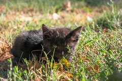 Little black kitty hiding in wild grass Royalty Free Stock Photography