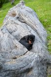 A little black puppy Stock Photo