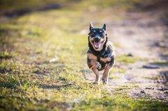 Little black puppy run. Little black puppy dog run, happy stock images