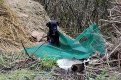 Little black puppy in the trash. A little black puppy in the trash stock images