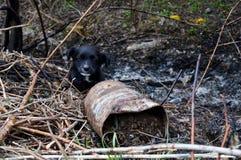 Little black puppy in the trash. A little black puppy in the trash stock photo