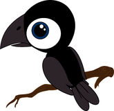 Little black raven on branch Royalty Free Stock Photo