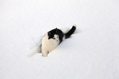 Little black and white cat sitting in the snow Royalty Free Stock Images