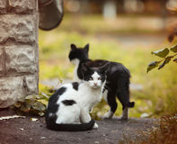 Little black and  white funny kittens. Little black and  white funny  autmn kittens Royalty Free Stock Photos