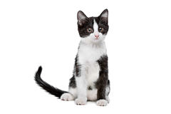 Little black and white kitten. In front of a white background Stock Photos