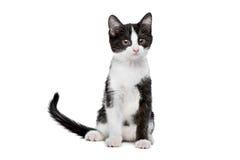 Little black and white kitten Stock Photos