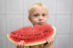 Little blond boy eats a big chunk of watermelon. Summer concept. Home interior.  stock photography