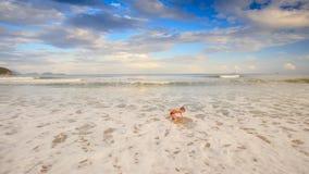 Little Blond Boy Gambols in Foamy Waves of Shallow Sea on Beach stock footage
