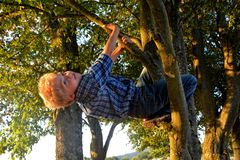 Little blond boy is hanging on the tree Royalty Free Stock Images