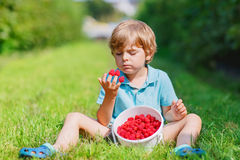 Little blond boy happy about his harvest on raspberry farm Royalty Free Stock Images