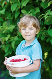 Little blond boy having fun with picking berries on raspberry fa Royalty Free Stock Photos