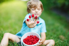 Little blond boy having fun with picking berries on raspberry fa Royalty Free Stock Images