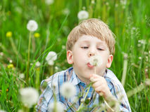 Little blond boy sitting in a meadow Stock Images