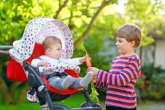 Little blond kid boy giving a carrot to baby sister. Happy siblings eating healthy snack. Baby girl sitting in pram or. Stroller. Brother and cute toddler stock photo