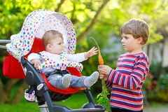 Little blond kid boy giving a carrot to baby sister. Happy siblings having healthy snack. Baby girl sitting in pram or. Stroller. Brother and cute toddler Stock Image