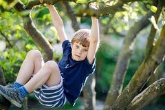Free Little Blond Kid Boy Of 5 Years Climbing In Tree In Summer. Stock Photos - 109206883