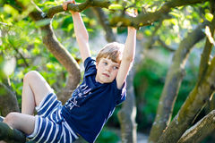 Little blond kid boy of 5 years climbing in tree in summer. stock photography
